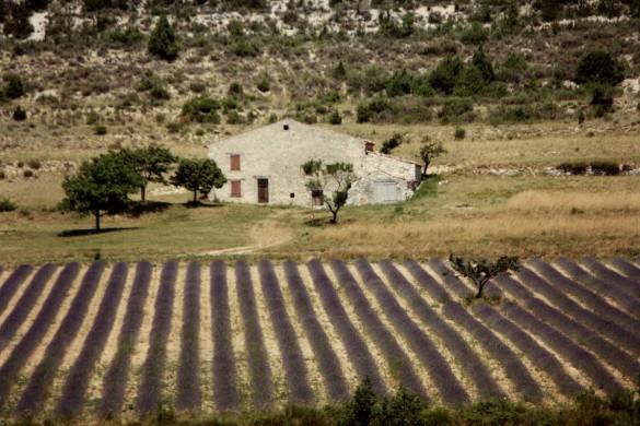 1985 Provence (37) ab 9x13-Farbbild